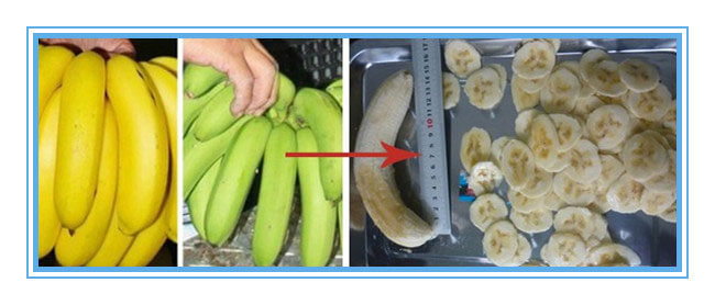 banana chips and plantain chips cut by banana slicer machine