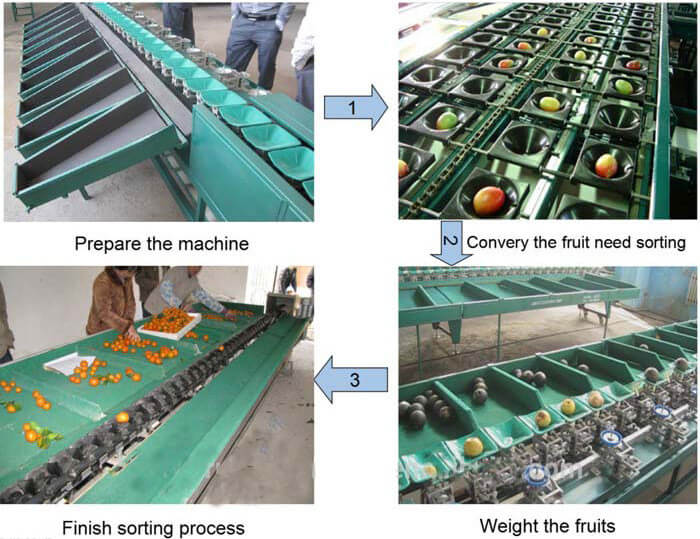 fruit sorting machine working processes