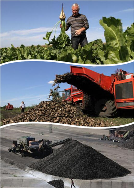 beet harvesting & delivering