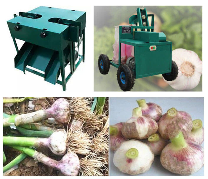 automatic garlic root cutter