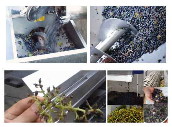 working steps of grape destmming crushing machine