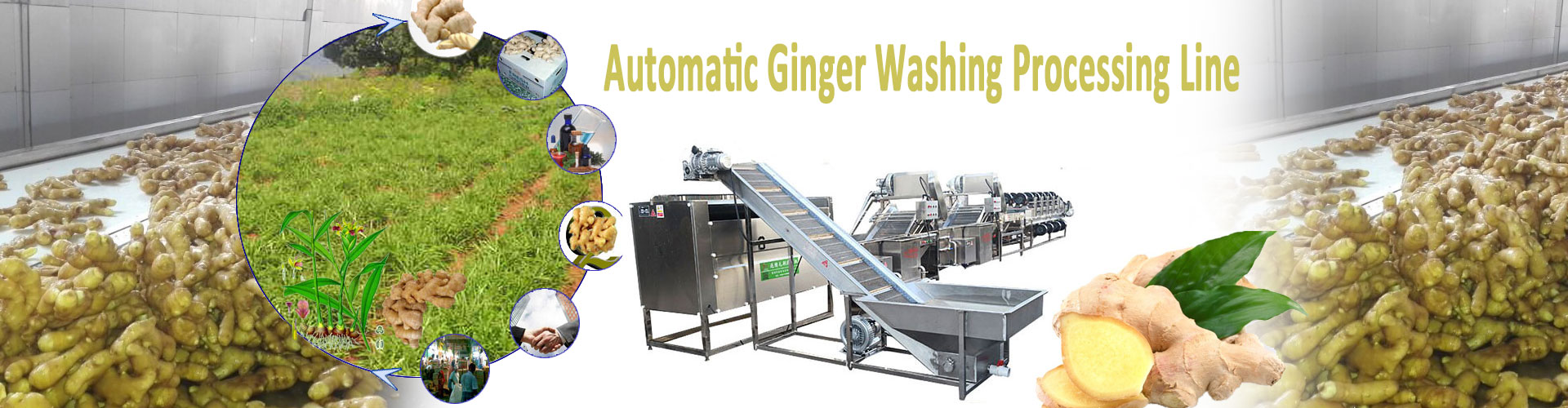 3ginger washing processing line