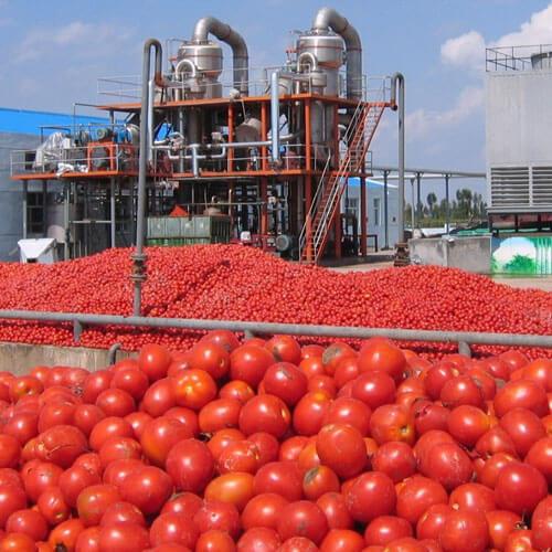 tomato paste making plant