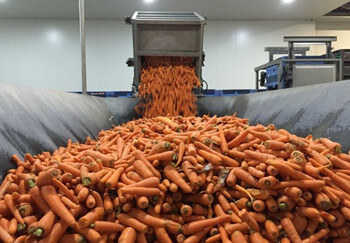 Carrot Processing Technology
